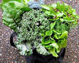 green leafy vegetables such as spinach, kale, watercress, lettuce, etc.